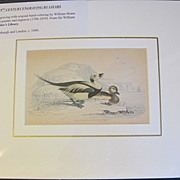 REDUCED 19th Century Engraving by LIZARS, Matted, Longtailed or Northern HARELD
