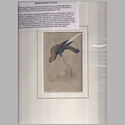 SALE Rare 1833 Hand-Colored Engraving by Joseph B. Kidd, Parrot, CREAM LORY