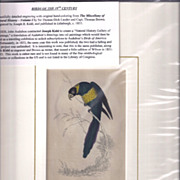 SALE 19th Century Engraving by Joseph B. Kidd, ZONED PARROT, Matted