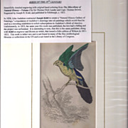 SALE 19th Century Engraving by Joseph B. Kidd, AZURE BLUE PARROT, Matted