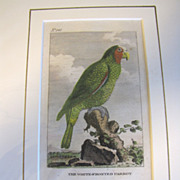 REDUCED Detailed Hand-Colored  Copper-Plate Engraving, The White-Fronted PARROT, c. 1790