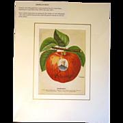 Original Color Lithograph U.S. Department Of Agriculture BISMARCK APPLE