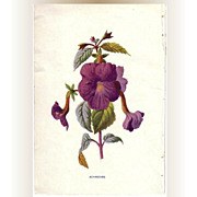 SALE Lovely Botanical Print from an Antique Natural History Book