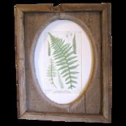 Rustic Folk Art Barn-wood Frame with British Fern Print