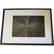 """SOLD Framed & Matted Vintage Macro Art Photograph by Otha Spencer, """"SEA BISCUIT"""""""