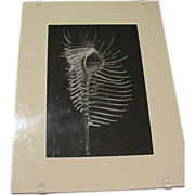 SALE Art Photograph by Otha Spencer, Skeleton