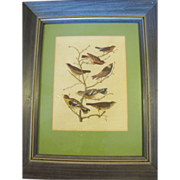 SALE Decorative Framed & Matted Print, Group of Birds