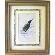 SALE Antique Lizars Hand Colored Engraving of Hummingbird, Framed