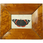 Antique Early 19th Century Miniature Watercolor Painting Butterfly Birds Eye Maple Frame Circa