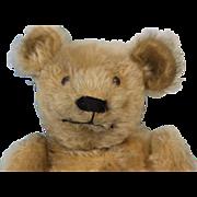 "SALE Antique c.1910 15"" Mohair German Teddy Bear Working Growler Shoe Button Eyes"