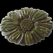 Carved Bakelite Brooch Vintage 1940s Olive Green Sunflower