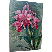 SOLD Hold for G Thomas Two Paul de Longpre Flower Prints Pink Orchids Goldenrod Bees