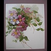 SOLD c1897 Purple Clematis Print Paul de Longpre Chromolithograph Antique Victorian Flower Flo