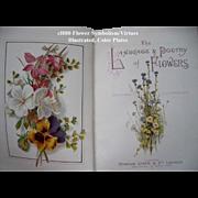 c1870 Language Poetry Flowers Book Color Roses Sweet Peas Flower Print Illustrations Ward ...
