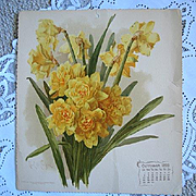 c1899 Daffodils Print Paul de Longpre  Chromolithograph