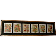 Six Paul de Longpre Butterfly Yard Long Print s Roses Lilac Clover Clematis Daisy ...