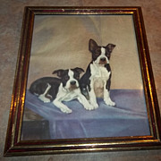 Charming Vintage Print Boston Terrier Puppy Dogs