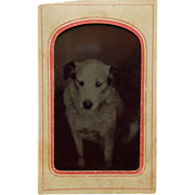 Tintype of White Dog In Paper Frame